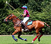 rider on horse playing polo