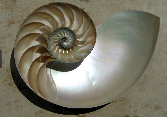 shell that can be used as biomaterial