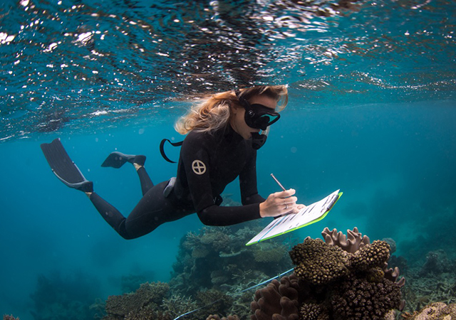 Taylor In action working for the Great Barrier Reef Legacy