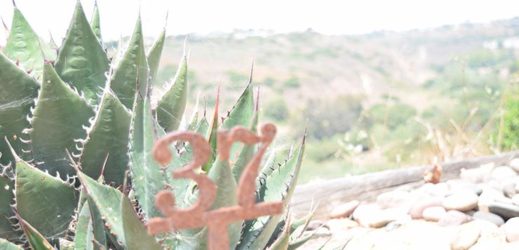 usd kuymeyaay garden shaws agave