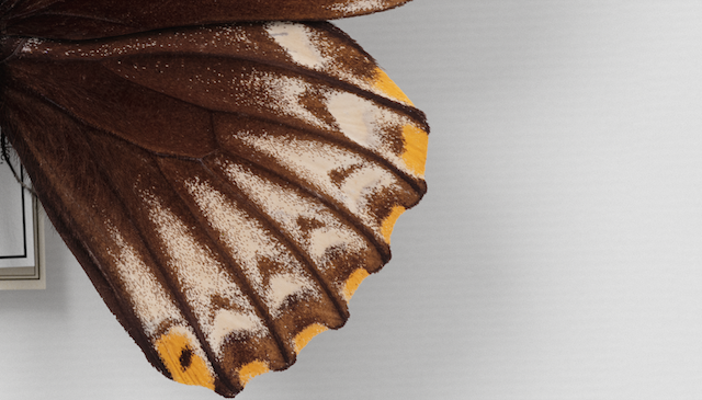 a close-up shot of a butterfly's wing