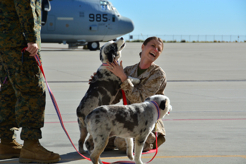 Alisa Johnson greets her dogs following deployment