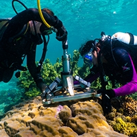 Two researchers collect coral samples