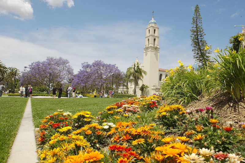 A patch of orange and yellow flowers in the foreground with the tower of USD's Immaculata Church in the background