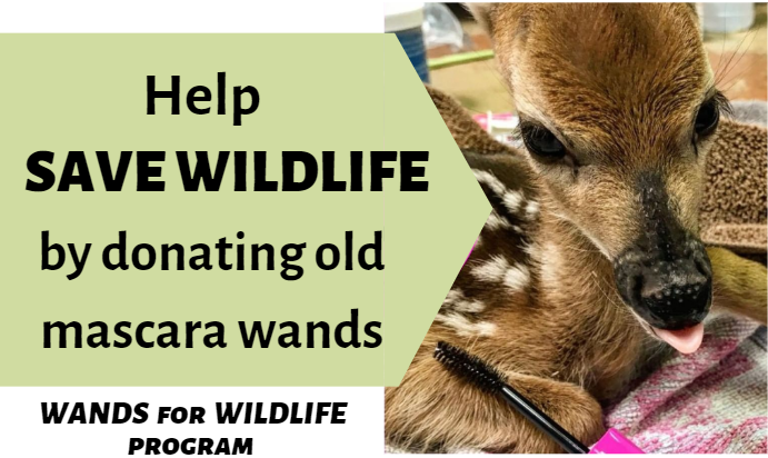 Wands for Wildlife