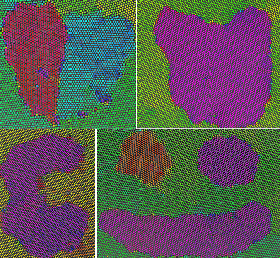 Differently oriented grains within a 2D colloid, created with optical blasting